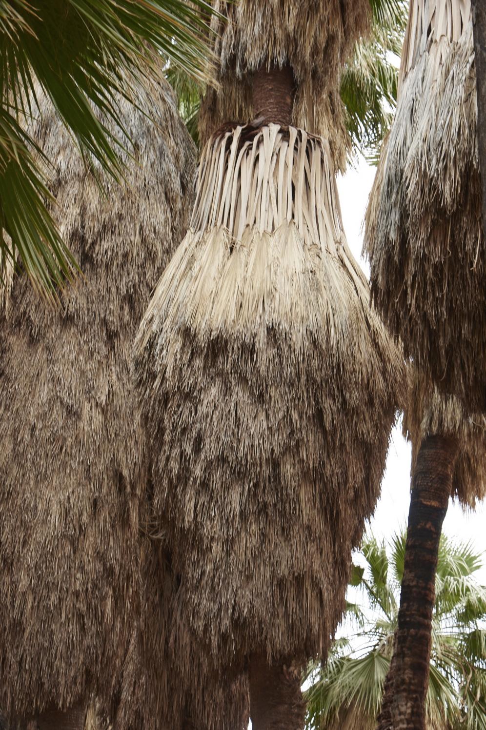 Palms 2.0