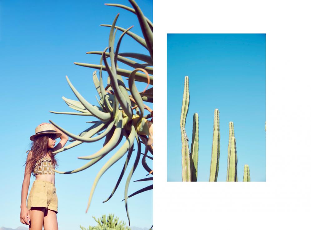 Hooligans | Cactus
